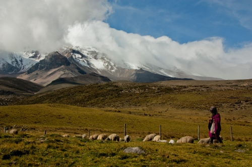 A sheep herder watches after her flock on the flanks of Chimborazo